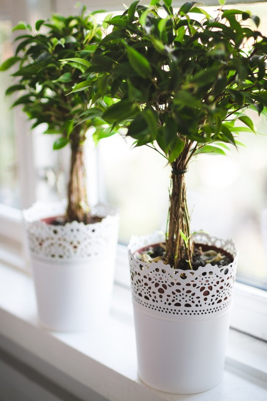 plants-768717_1920
